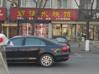 碧海水族馆(鼎盛西大街店)