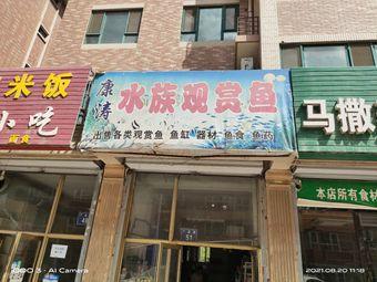 康涛水族观赏鱼