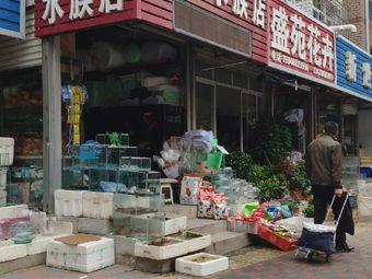 宋磊水族店