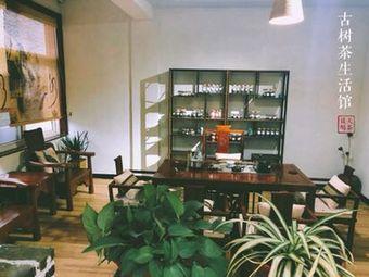 古树茶生活馆