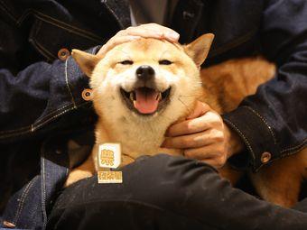 發柴屋·柴犬體驗館(漢街店)