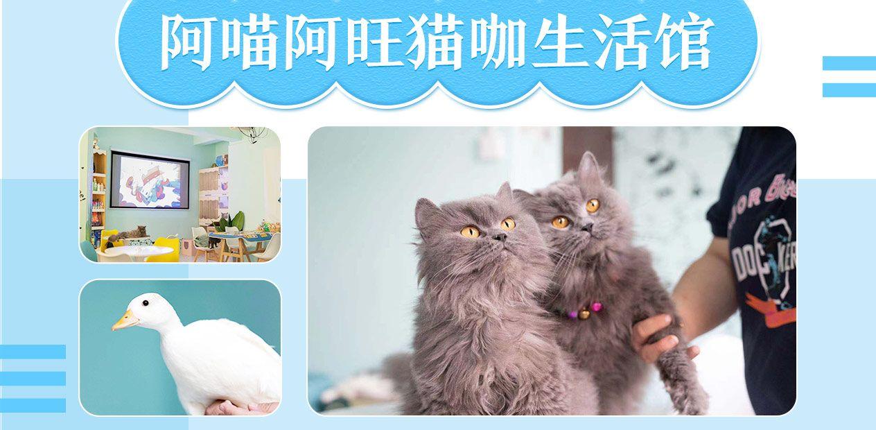 美团圈圈西安站 | 阿喵阿旺猫咖生活馆丨单人撸猫套餐丨撸猫、饮品、桌游…