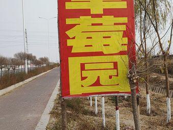 浙江草莓园