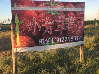 小芳草莓园