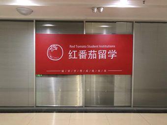 红番茄留学教育机构