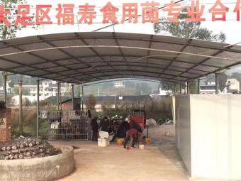 重庆市大足区福寿食用菌专业合作社